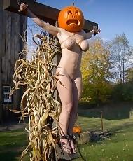 Pumpkin beauty tortured